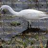 Cameron Prairie NWR, Lake Charles, Louisiana 01112018 074
