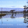 Lake Martin, Breaux Bridge, Louisiana 01082018 056