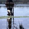 Lake Martin, Breaux Bridge, Louisiana 01082018 133