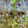 Cameron Prairie NWR, Lake Charles, Louisiana 01112018 052