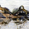 Cameron Prairie NWR, Lake Charles, Louisiana 01112018 075
