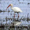 Cameron Prairie NWR, Lake Charles, Louisiana 01112018 001