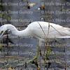 Cameron Prairie NWR, Lake Charles, Louisiana 01112018 072