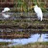 Cameron Prairie NWR, Lake Charles, Louisiana 01112018 040