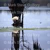 Lake Martin, Breaux Bridge, Louisiana 01082018 134
