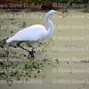 Lake Martin, Breaux Bridge, Louisiana 01082018 026