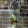 Lake Martin, Saint Martin Parish, Louisiana 09172017 231