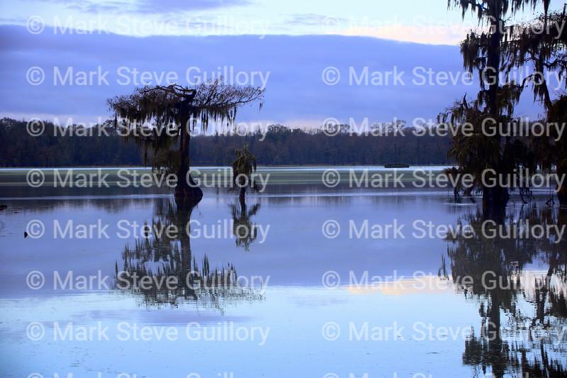 Lake Martin, Breaux Bridge, Louisiana 01082018 057