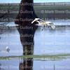 Lake Martin, Breaux Bridge, Louisiana 01082018 123