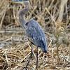 Cameron Prairie NWR, Lake Charles, Louisiana 01112018 026