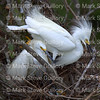 Rip's Rookery, Jefferson Island, La 061917 076