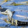 RIPs Rookery, Jefferson Island, New Iberia, Louisiana 03152018 066