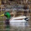 Lacassine Pool, Lacassine NWR, Lake Arthur, Louisiana 02052018 012