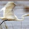 Lacassine Pool, Lacassine NWR, Lake Arthur, Louisiana 02052018 017