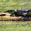 Morgan City Area Nature 04122018 003