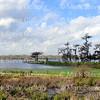 Lake Martin, Breaux Bridge, Louisiana 02192018 007