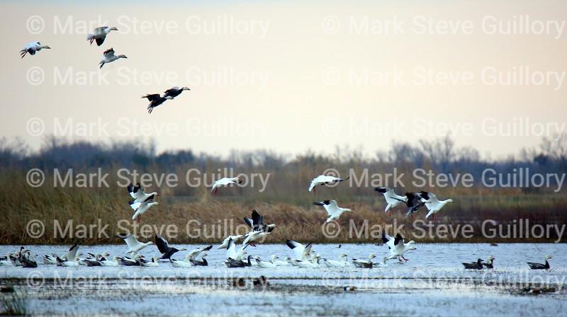 Pintail Wildlife Drive, Cameron Prairie NWR, Louisiana 02052018 009