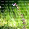 RIPs Rookery, Jefferson Island, New Iberia, Louisiana 03152018 072