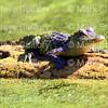 Morgan City Area Nature 04122018 004