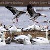 Pintail Wildlife Drive, Cameron Prairie NWR, Louisiana 02052018 125
