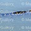 RIPs Rookery, Jefferson Island, New Iberia, Louisiana 03152018 068