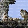 Hawk's Nest, St Mary Parish, Louisiana 04212018 037