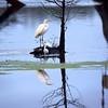 Lake Martin, Breaux Bridge, Louisiana 01082018 125