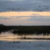 Cameron Prairie NWR, Louisiana 113014 041