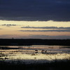 Cameron Prairie NWR, Louisiana 113014 003