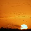 Cameron Prairie NWR, Louisiana 112914 249