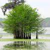 Lake Martin, Breaux Bridge, Louisiana 03262018 010