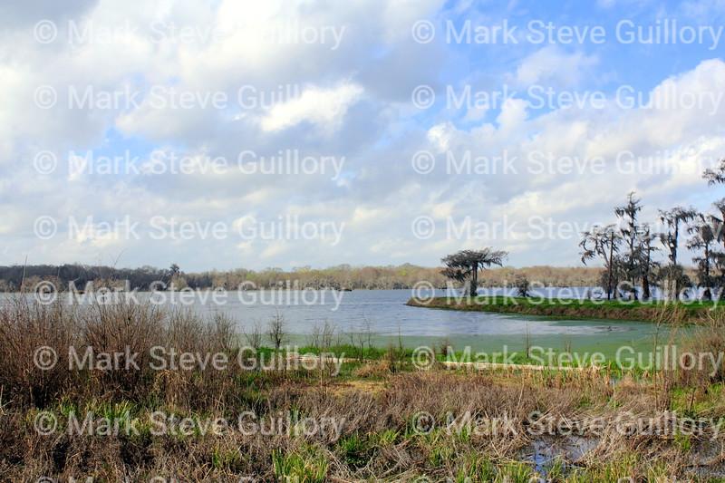 Lake Martin, Breaux Bridge, Louisiana 02192018 008