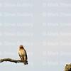 Hawk's Nest, St Mary Parish, Louisiana 04212018 126