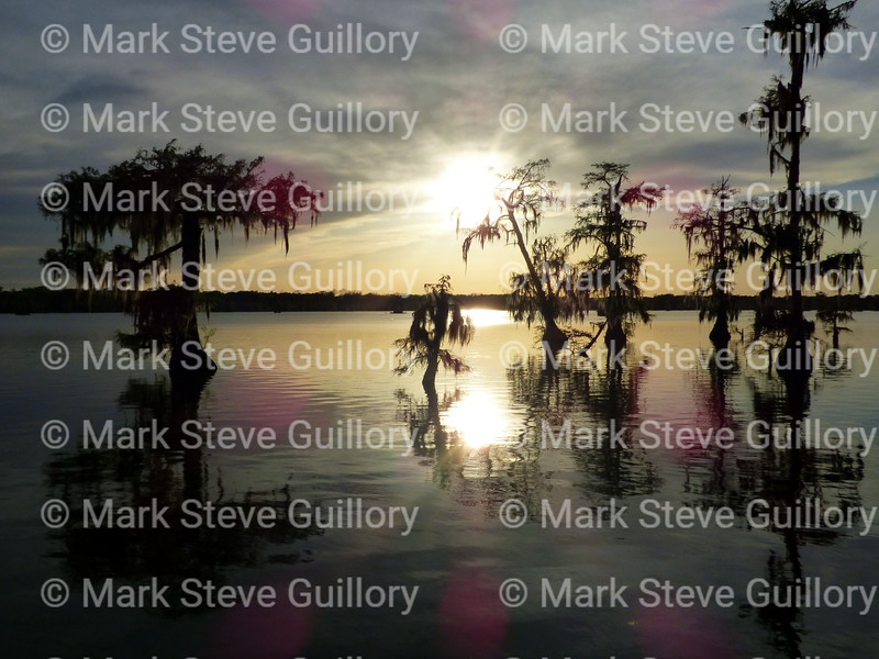 Lake Martin, Breaux Bridge, Louisiana 03302018 019