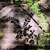 Acadiana Park Nature Trails, Lafayette, Louisiana 04242018 003