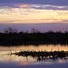 Cameron Prairie NWR, Louisiana 121114 061