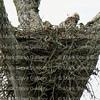 Hawk's Nest, St Mary Parish, Louisiana 04212018 002
