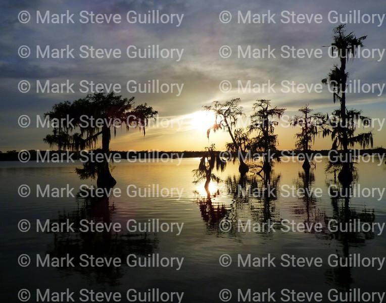 Lake Martin, Breaux Bridge, Louisiana 03302018 022