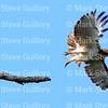 Hawk's Nest, St Mary Parish, Louisiana 04212018 140