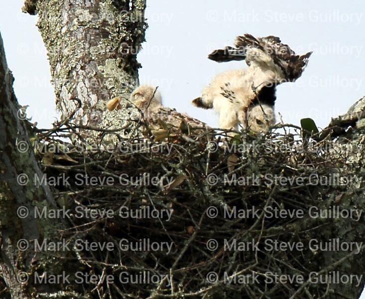 Hawk's Nest, St Mary Parish, Louisiana 04212018 018