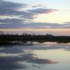 Cameron Prairie NWR, Louisiana 113014 063
