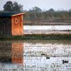 Cameron Prairie NWR, Louisiana 113014 131
