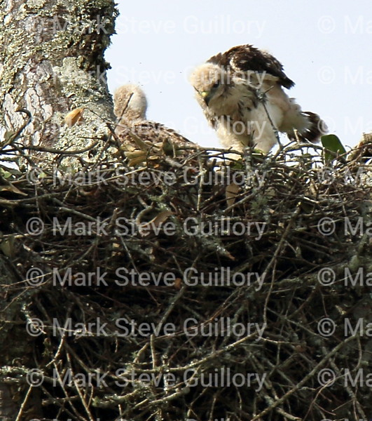 Hawk's Nest, St Mary Parish, Louisiana 04212018 021