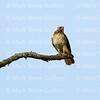 Hawk's Nest, St Mary Parish, Louisiana 04212018 119
