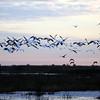 Cameron Prairie NWR, Louisiana 121114 093