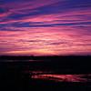 Cameron Prairie NWR, Louisiana 121114 005