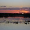 Cameron Prairie NWR, Louisiana 113014 058