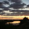 Cameron Prairie NWR, Louisiana 113014 001