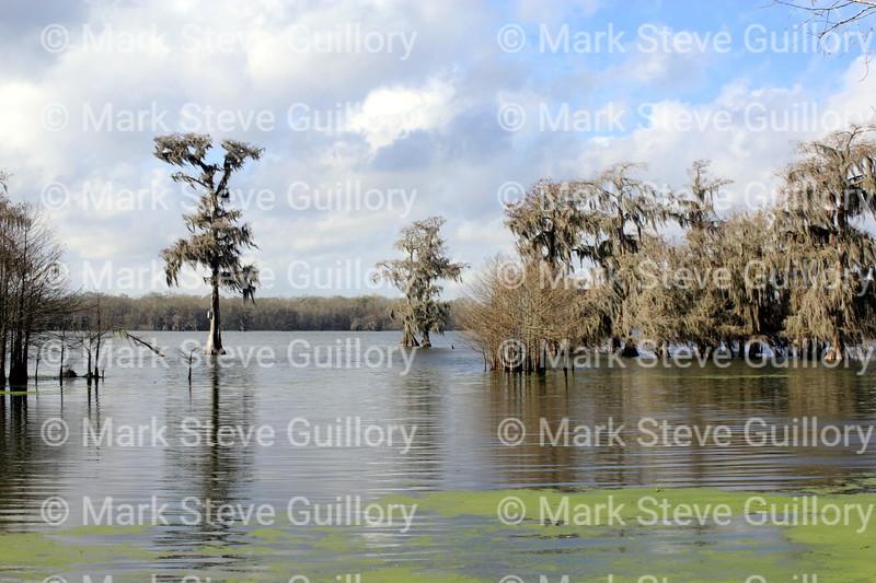 Lake Martin, Breaux Bridge, Louisiana 02192018 006