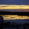 Cameron Prairie NWR, Louisiana 121114 082